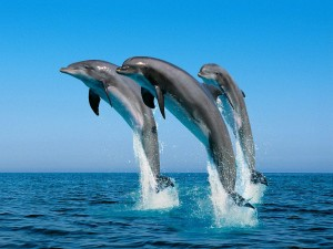 Dolphin Cove traded at an all-time high on Friday